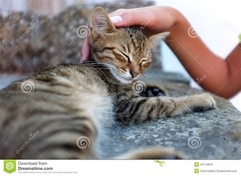 petting a person is petting a cat stock photo image 44714878