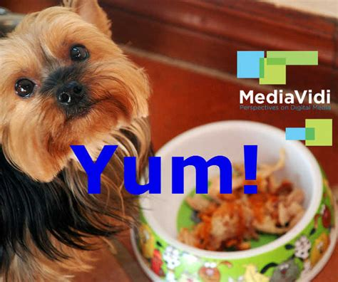 puppy eats own eat your own food mediavidi