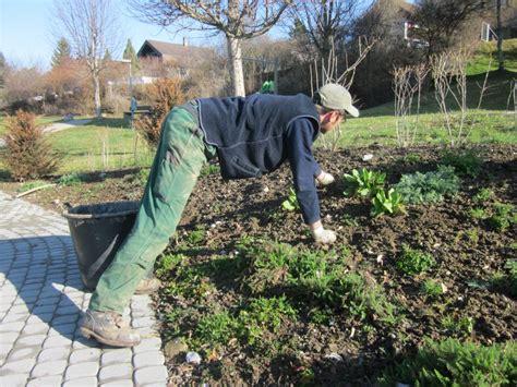 naturnaher garten anlegen naturgarten yasiflor gartenbau