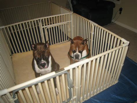 how to make a whelping box for a yorkie buying a pvc whelping puppy box for breeders rover company prlog