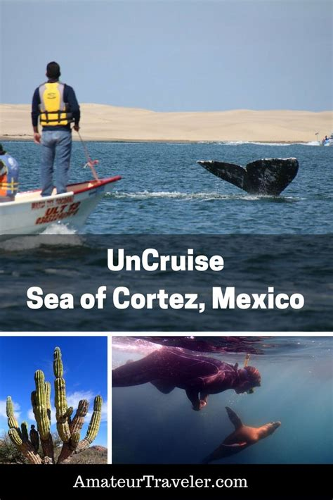 small boat cruises caribbean small ship cruise on uncruise in the sea of cortez baja