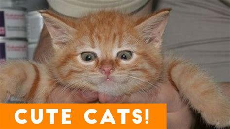 Cutest Cats Pet Pet Pet Product 8 by Ultimate Cats Compilation Pets 2017