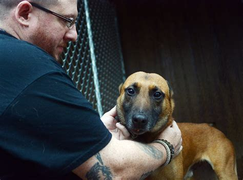 loyalty repaid canine rescue gains national scope news
