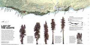 sequoia trees in california map mendocino coastal redwoods how they were felled moved