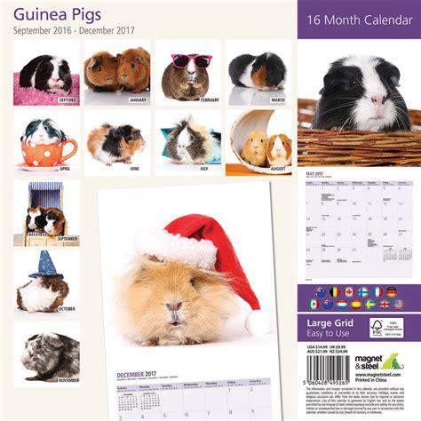 16 Month Calendar 2017 Guinea Pig 2017 16 Month Calendar Ebay