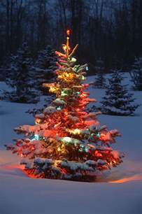 Tree Lighting In Tree With Lights Outdoors In Photograph By