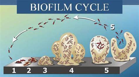 biofilm adalah genetics and genomics of candida albicans biofilm