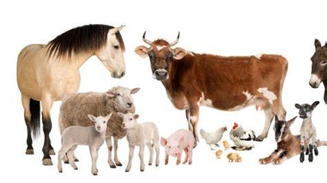imagenes animales dela granja el mundo de las mascotas animales domesticos