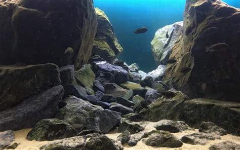 mbuna aquascape 193 best images about lake malawi mbuna on pinterest