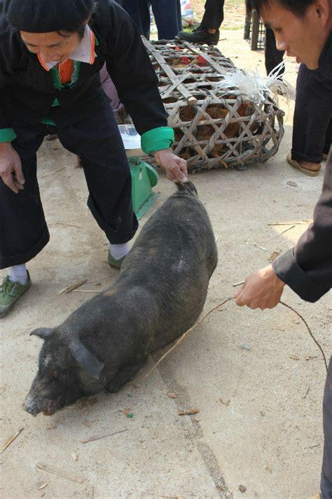 Squeal Piggy Piggy by Squeal Piggy Squeal Photo