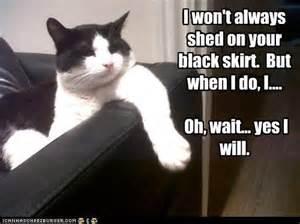 cat fur cat grooming solutions