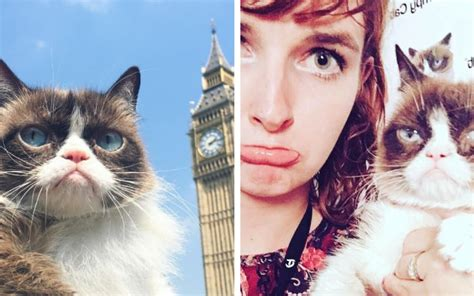 grumpy cat hysteria hits  uk  crowds queue  hours
