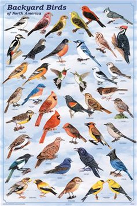 indiana backyard birds 1000 images about nature on pinterest backyard birds