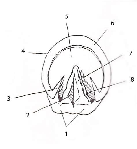 hoof diagram august 2010 the shambles highland butte