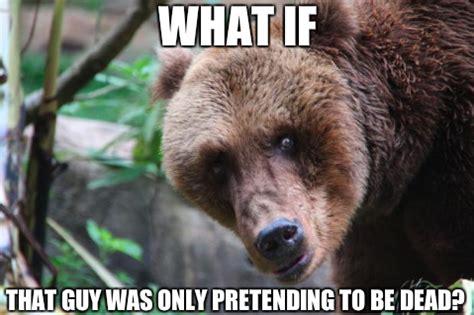 Bear Memes - bear memes image memes at relatably com