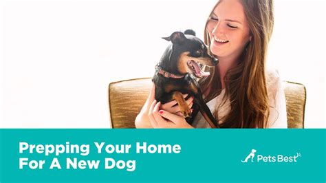 new puppy owner guide new owner s guide pets best tips for bringing your new home