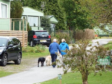 parks that allow dogs pet friendly caravan parks what you need to knowcoastal kippford