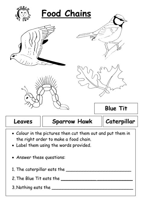 food chain worksheet pdf 12 best images of worksheets food chain web pyramid food