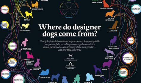 list of purebred dogs infographic an interesting list of mix breed designer dogs and their parentage