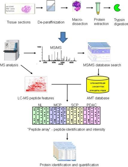 proteomics workflow the workflow of the label free quantitative proteomics