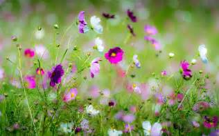 28 beautiful spring flowers beautiful spring