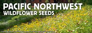 wildflower seed mixtures specially formulated for the
