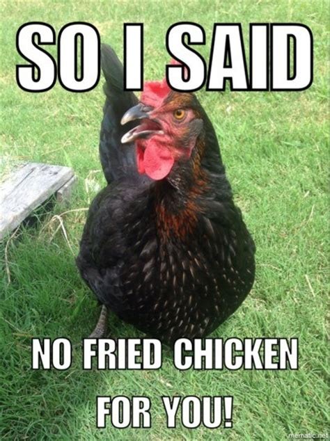Funny Chicken Memes - another meme thursday jones natural chews