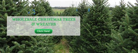 christmas tree farm wholesale photo albums fabulous