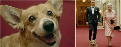 queen elizabeth and her long story with corgis