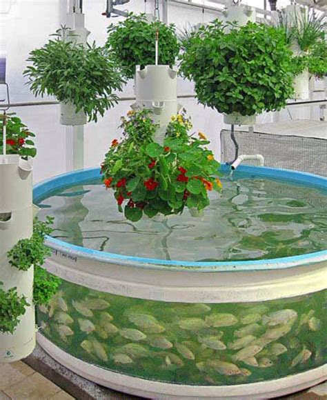 backyard aquaponics system design aquaponic system decorate room design for your home