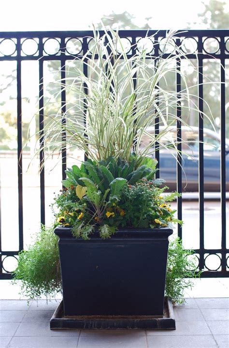 fall annuals container planter sidewalk garden