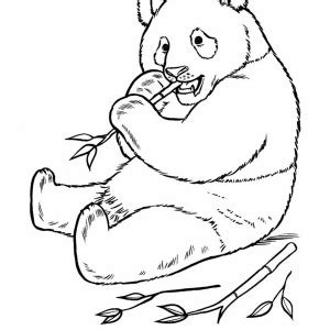 coloring page of giant panda giant panda coloring sheet coloring pages