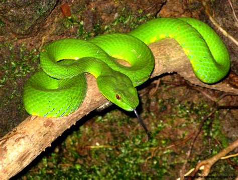 amazon rainforest animals amazon rainforest animals for kids amazing wallpapers