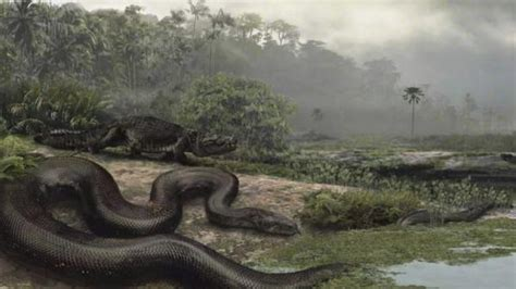 Find In Colombia Fossil Of Largest Snake Found In Colombia Upi