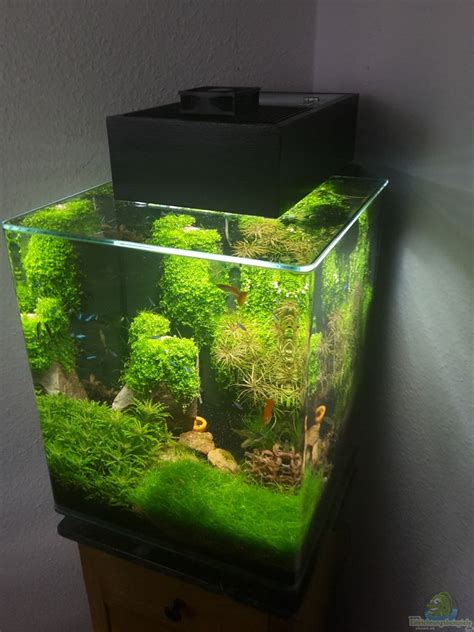 fluval edge aquascape exle no 32564 from the category aquascaping