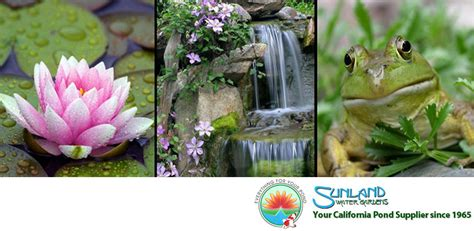 Sunland Water Gardens by Get Aquaponics Supplies For Sale