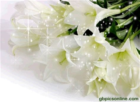 Pflanzen Garten Jux by Blumen Bild Blumen Gb Bilder G 228 Stebuch Bilder Und