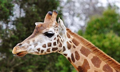 imagenes de animales wikipedia animales informaci 243 n en la enciclopedia animal 174 anipedia