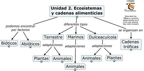 cadenas troficas en ecosistemas unidad 2 ecosistemas y cadenas tr 243 ficas