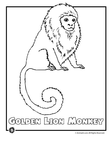 rainforest coloring sheets coloring pages to print 891