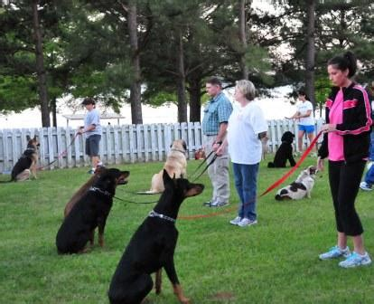 puppy obedience classes programs the city of ridgeland