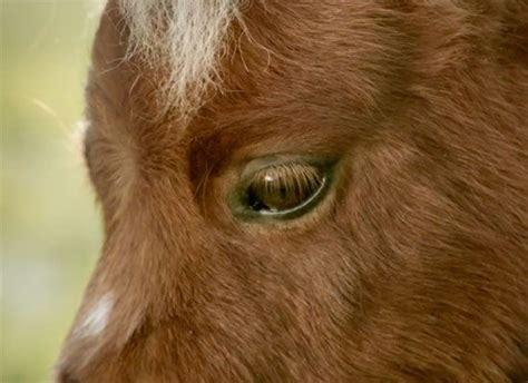 amazon commercial actress horse friends horses and for her on pinterest