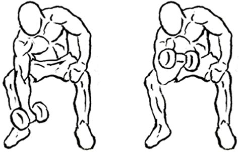 Standing Concentration Curl by Complete Biceps Workouts From Beginner To Professional