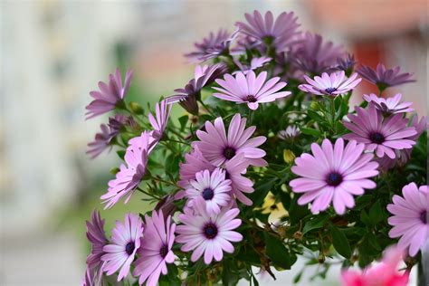 photos of flowers free stock photo of background beautiful bloom