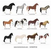 Download Mustang Wallpaper 240x320  Wallpoper 2517