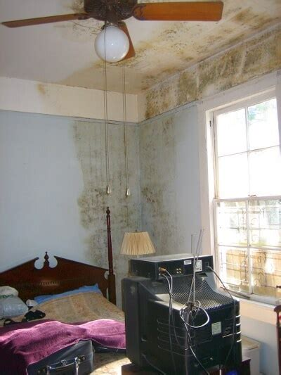 How To Stop Mold In Bedroom by Buying Or Selling A Home With Mold Homesinsanpete
