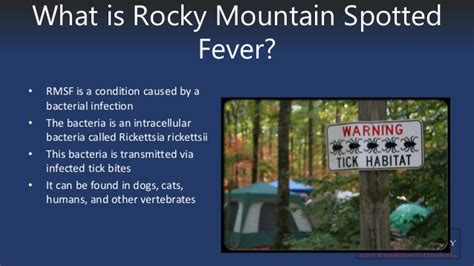 rocky mountain spotted fever in dogs rocky mountain spotted fever