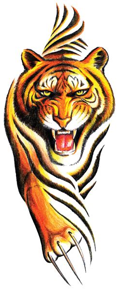 free tiger tattoo designs celtic tattoos free png transparent image and clipart