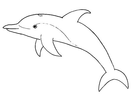 dolphin colors dolphins beautiful dolphin to color coloring pages