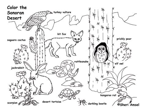 Desert Coloring Pages For Kids Az Coloring Pages | desert animals coloring pages az coloring pages